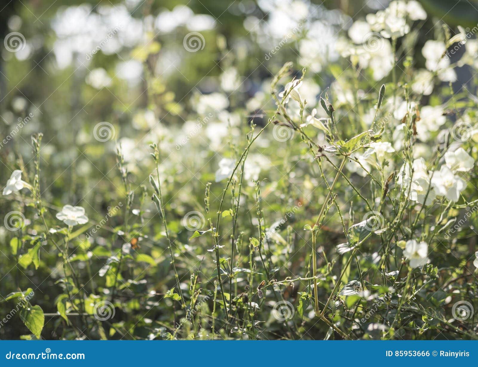Sol En Hierba Verde Y La Flor Blanca Foto de archivo - Imagen de ... cb16648d703