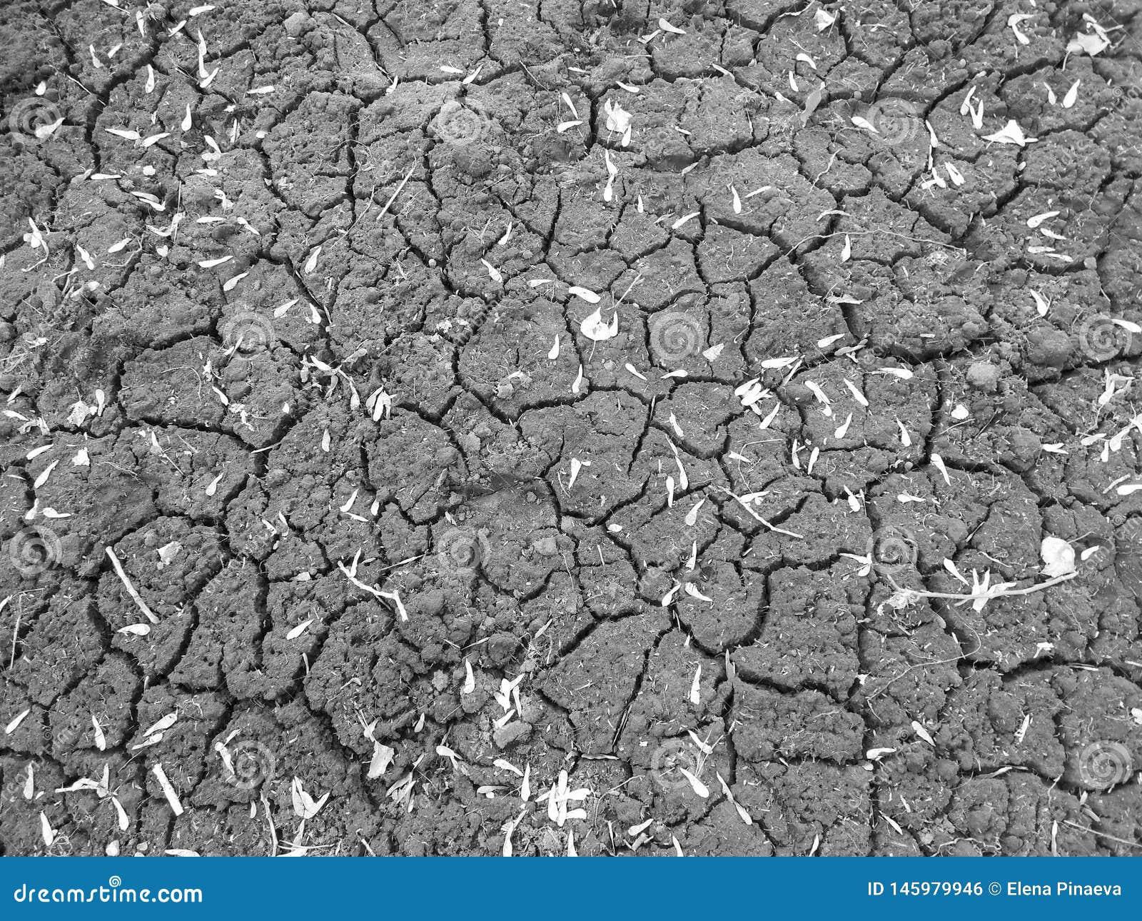 Sol noir en fissures avec les pétales secs