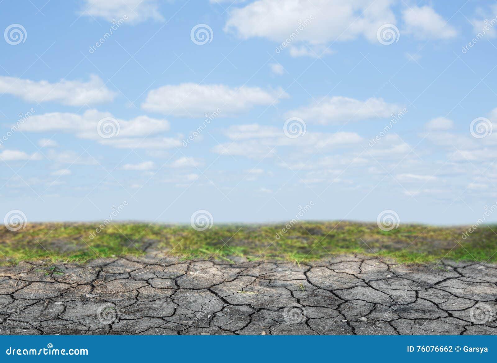Sol sec avec de la mousse verte