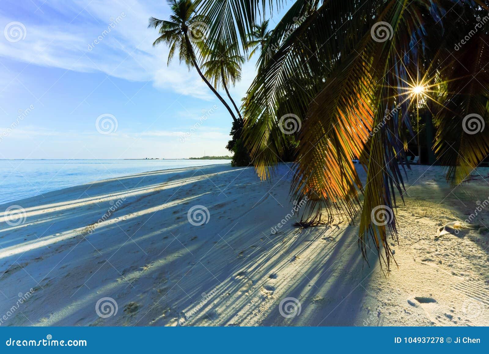 Sol a través de la palmera en la playa