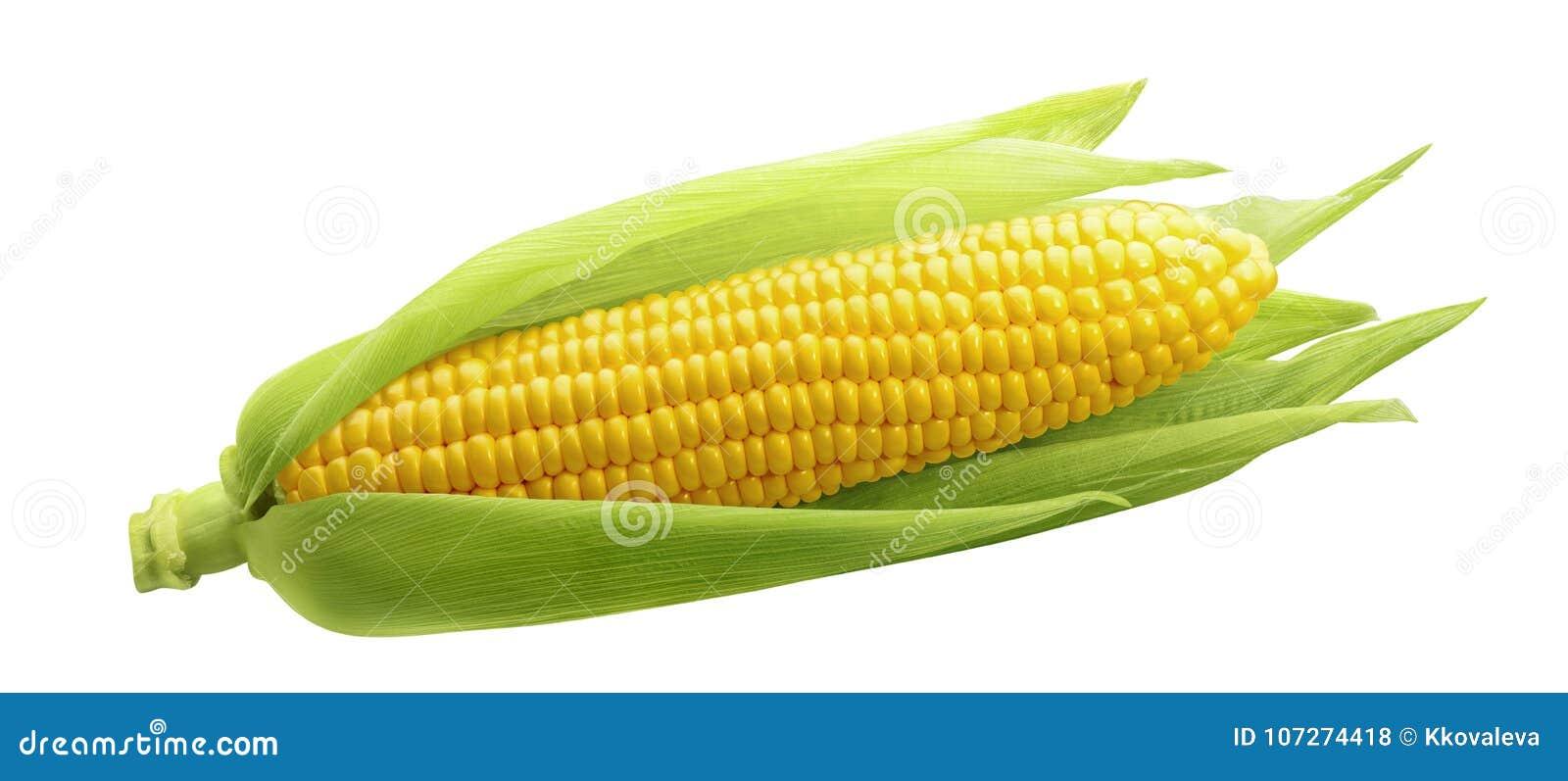 Sola espiga de trigo aislada en el fondo blanco