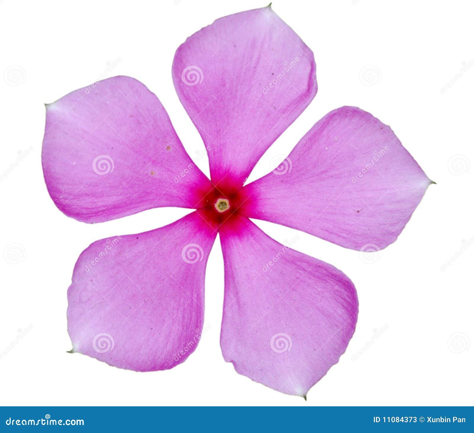 Sola flor rosada