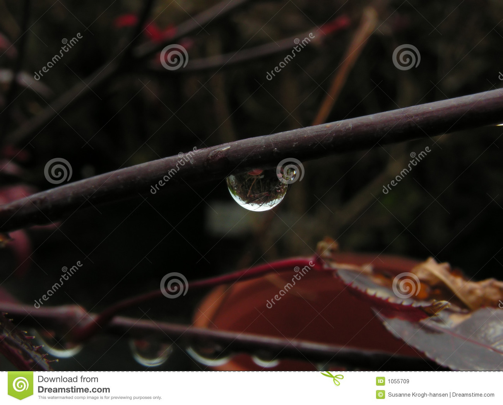 Sola gota en una ramificación