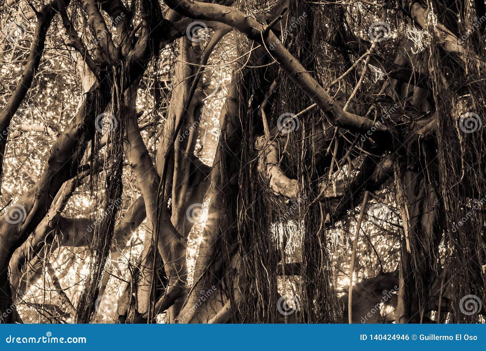 Sola selva del color del detalle con asolear el relámpago