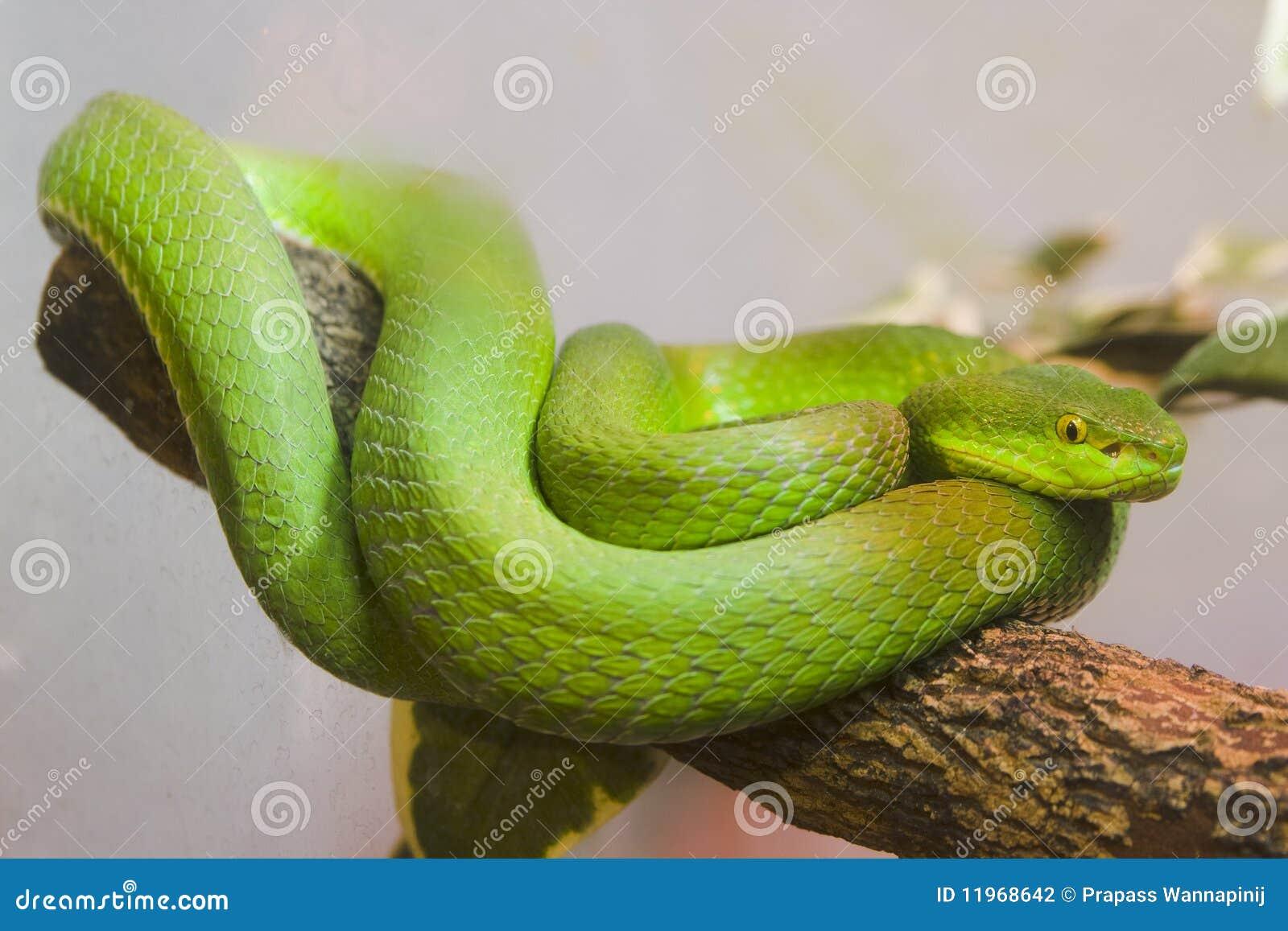 Cazador de serpientes serpiente por la vagina - 2 part 5