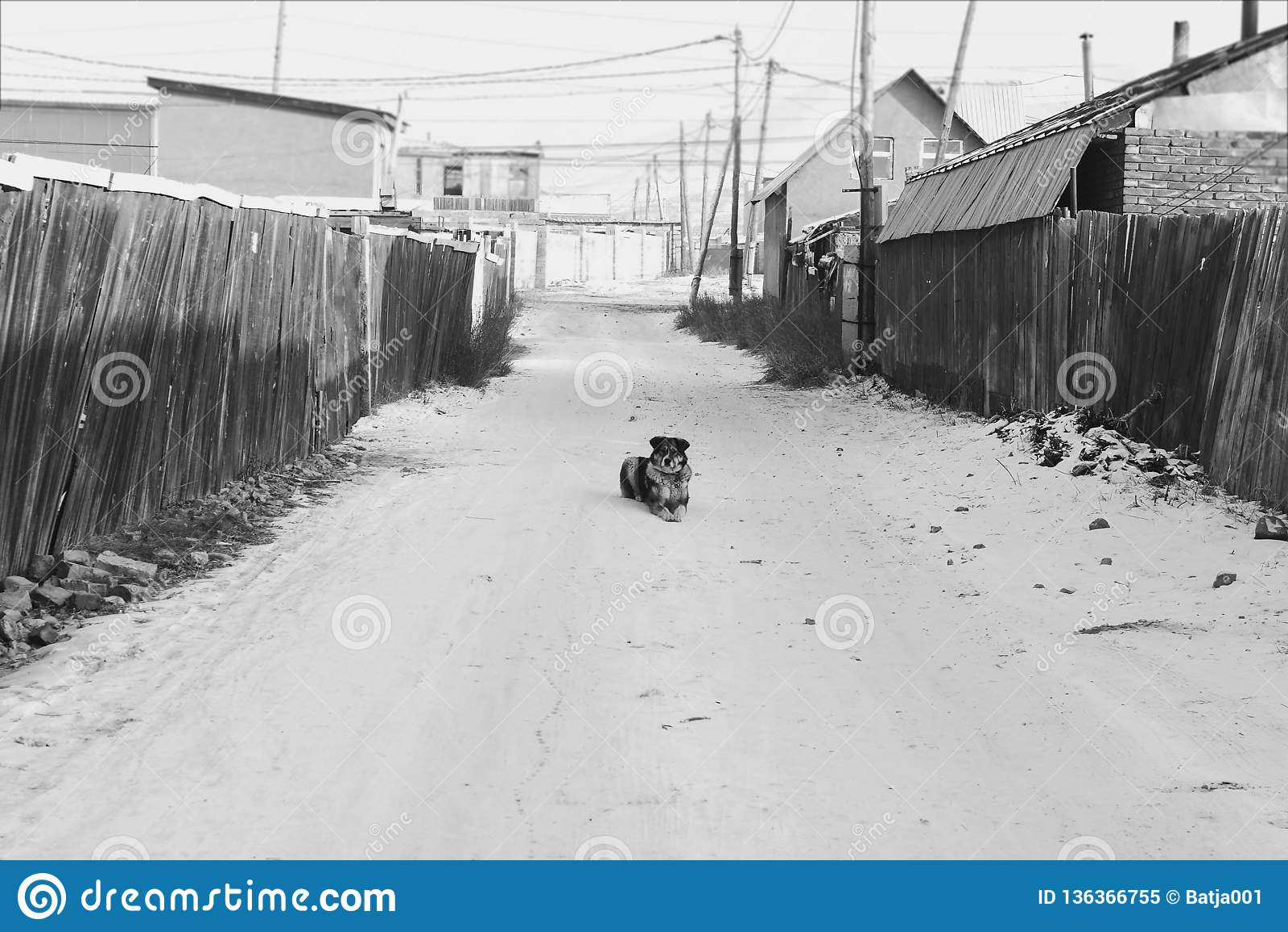 Solamente en la calle