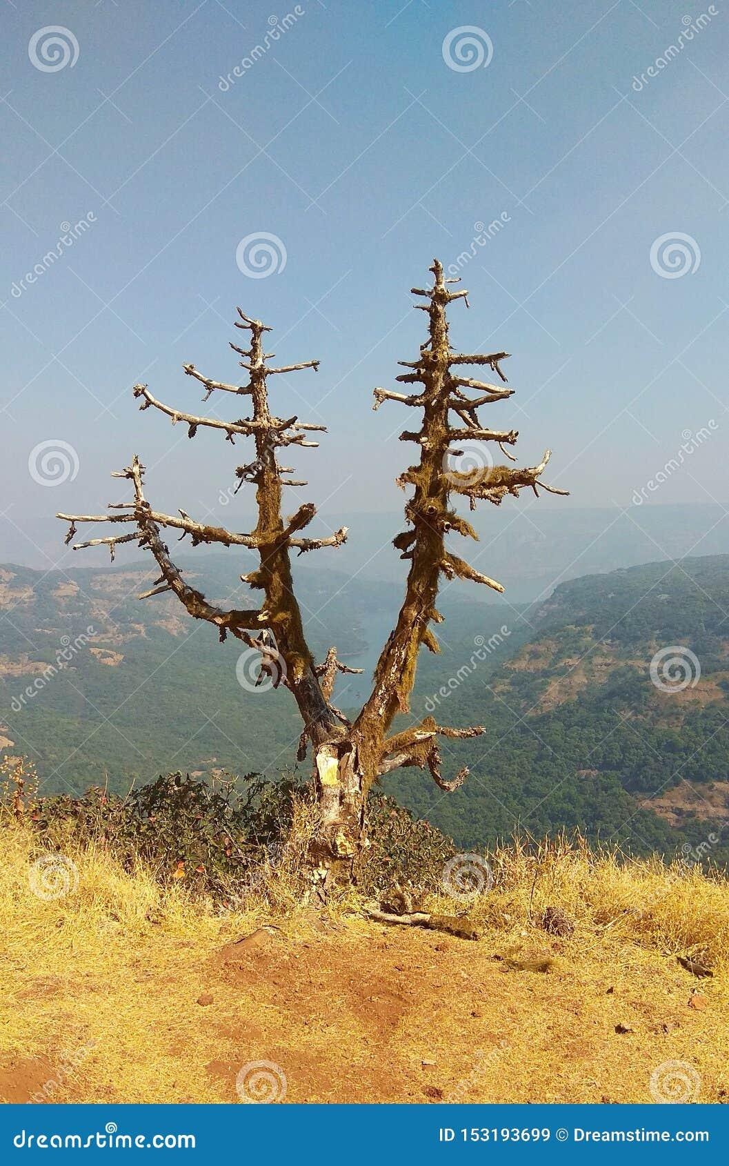 Solamente muertos del árbol