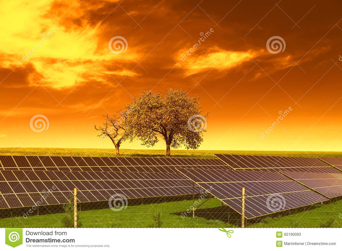 solar panels vs trees Donald m asks: my wife and i have recently bought a house and it looks like it has the perfect roof for solar panels however, in the way of the south-facing view of the sun, on our.