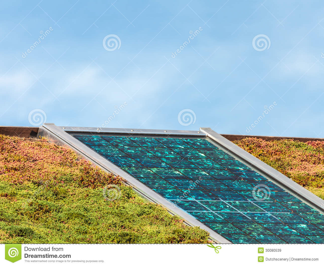 Solar Panels On A Roof Covered With Sedum For Isolation