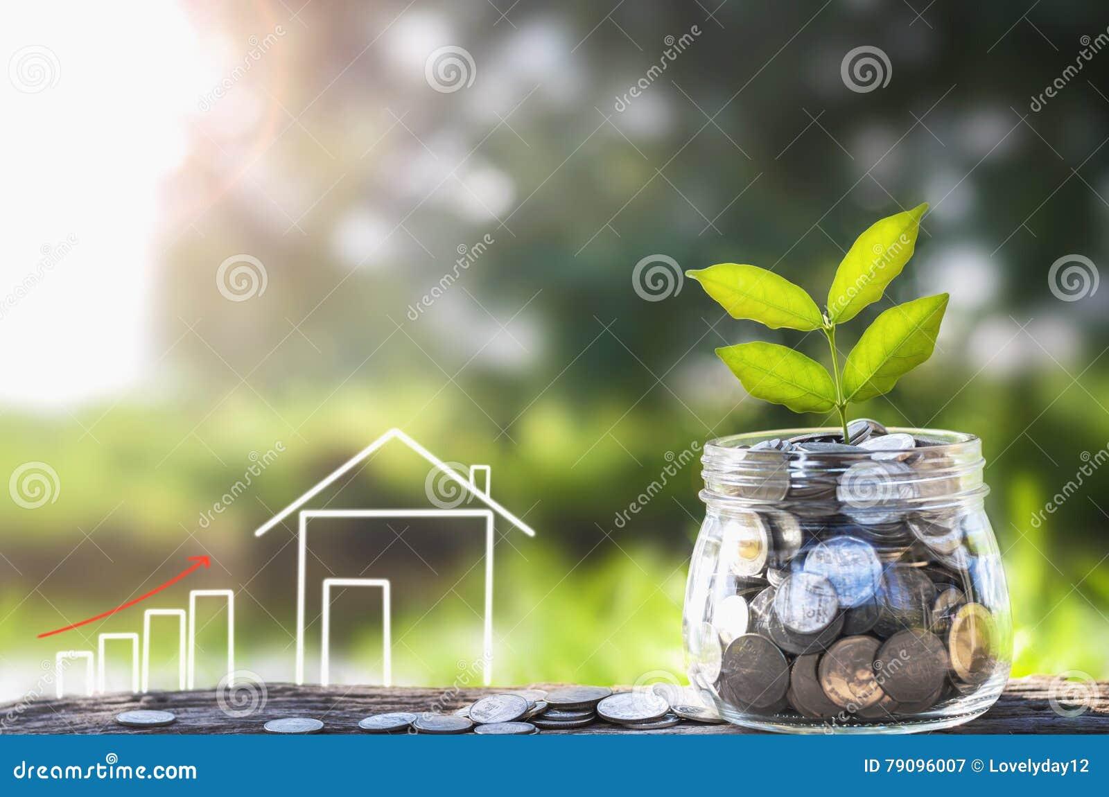 Soldi e pianta crescenti, concetto di risparmio dei soldi, concetto del risparmio finanziario per comprare una casa