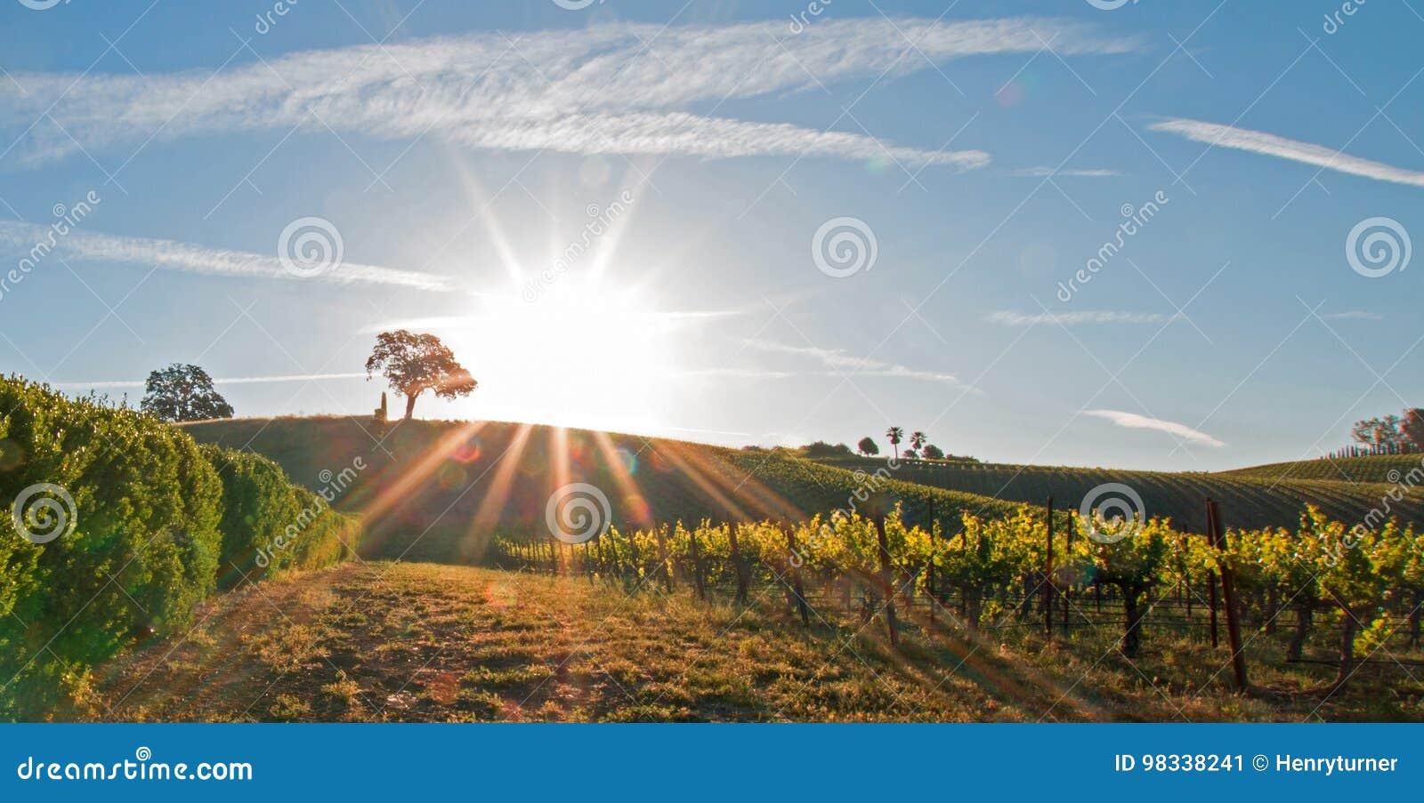 Sole di primo mattino che splende accanto alla quercia della valle sulla collina nel paese di vino di Paso Robles nel Central Val