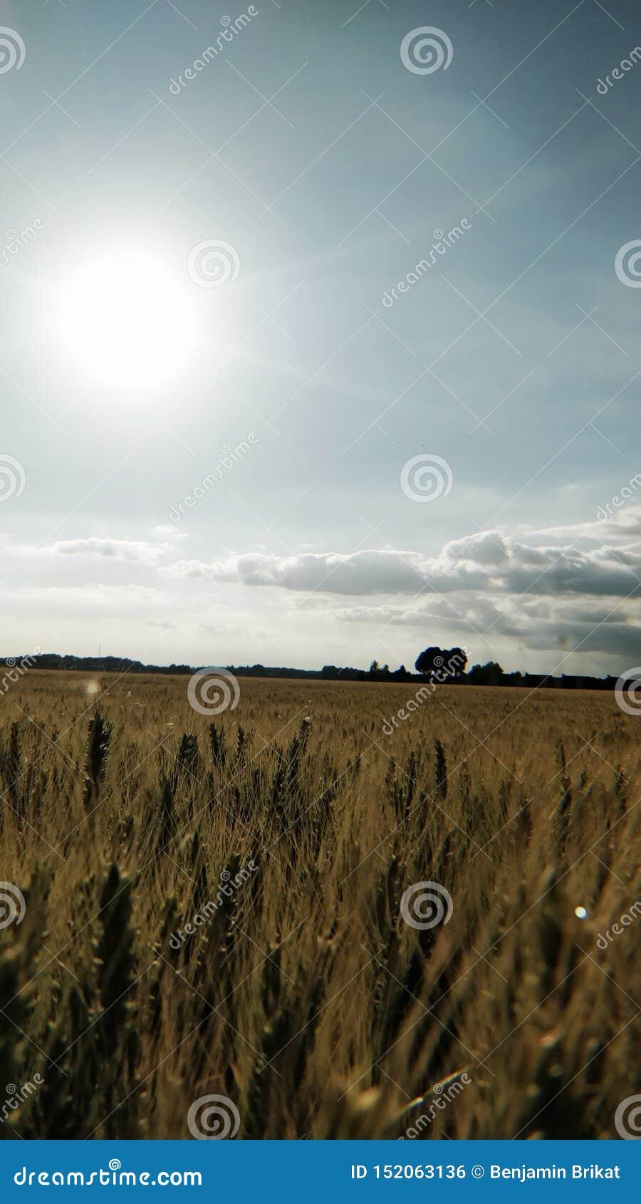 Soligt och att shinny fältet