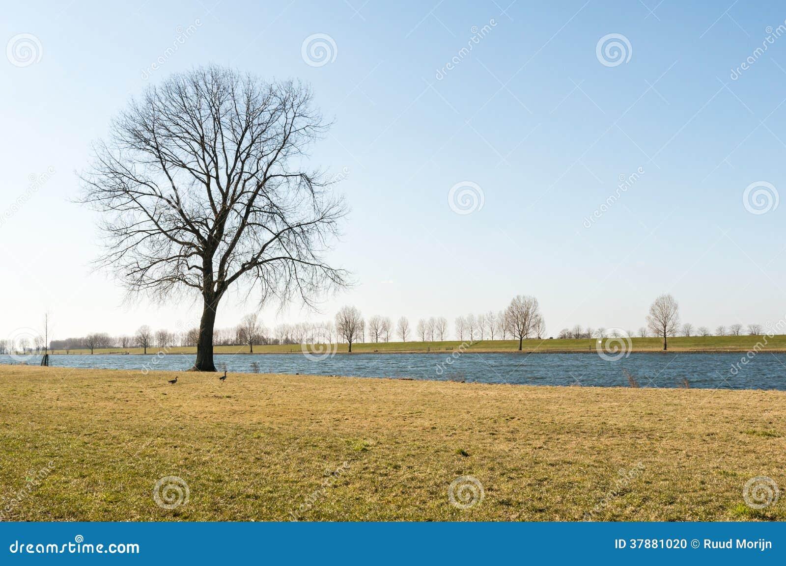 Solitaire boom op de bank van een rivier