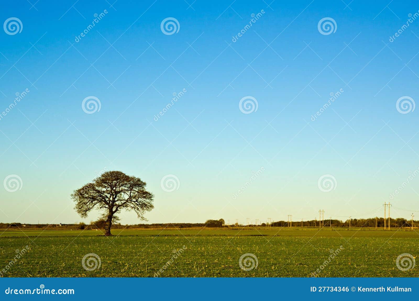 Solitaireeichenbaum
