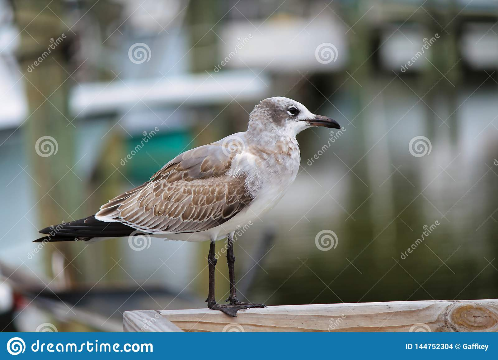 A soliary bird walking along a pier pecking the dock