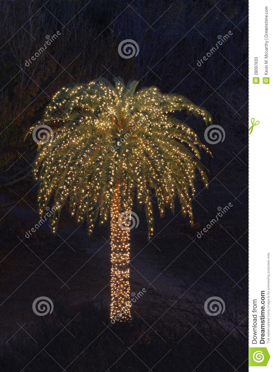 Solitary Palm Tree Decorated With Christmas Lights Stock
