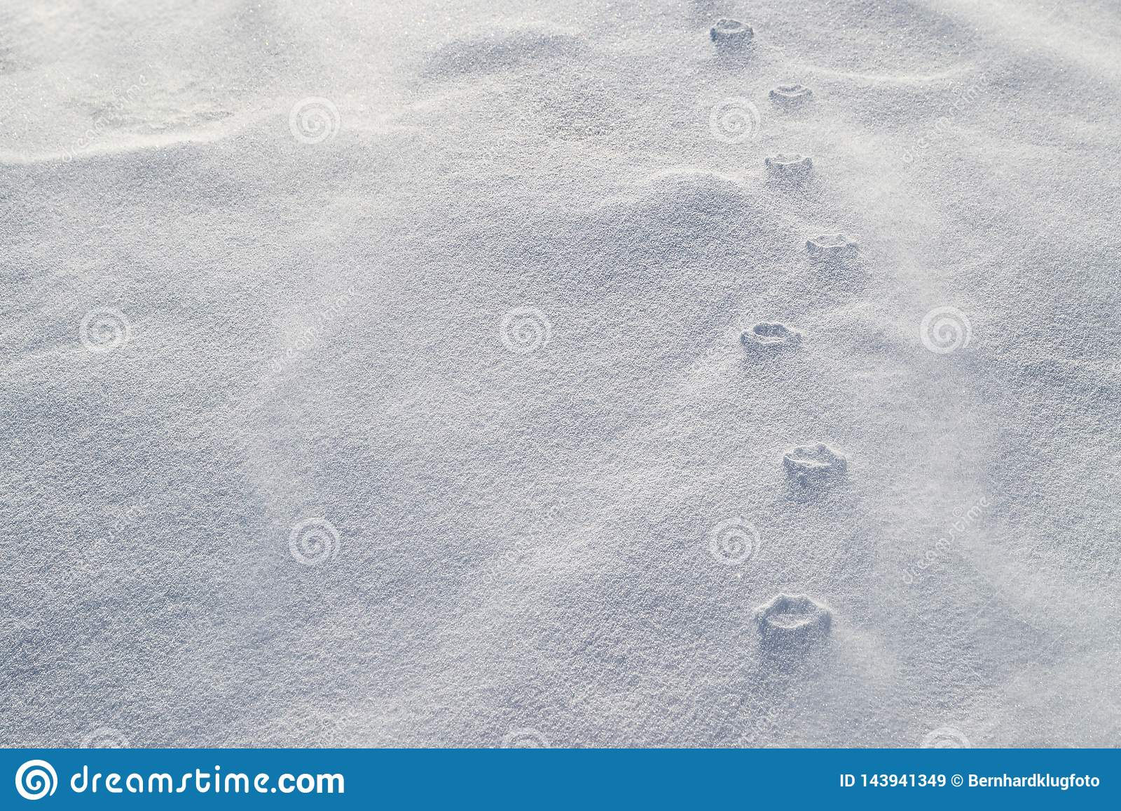 Sollievo Haute delle stampe della zampa in neve di salto I forti venti hanno eroso la neve sciolta intorno alle stampe compresse
