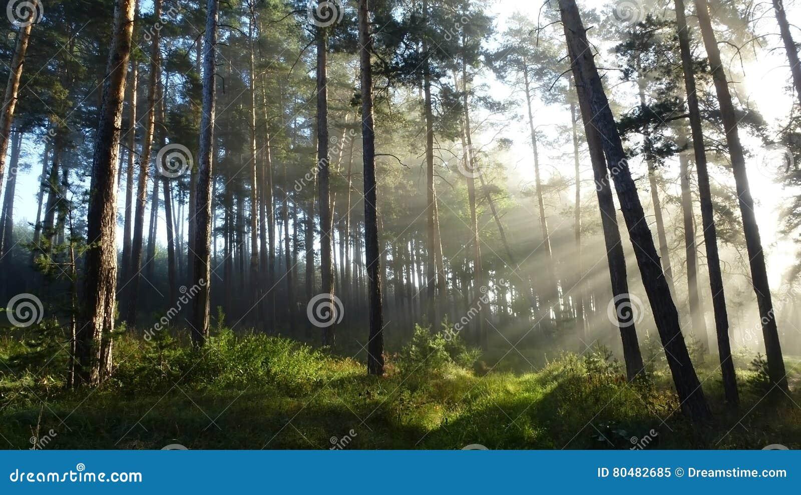 Solljus från dimman