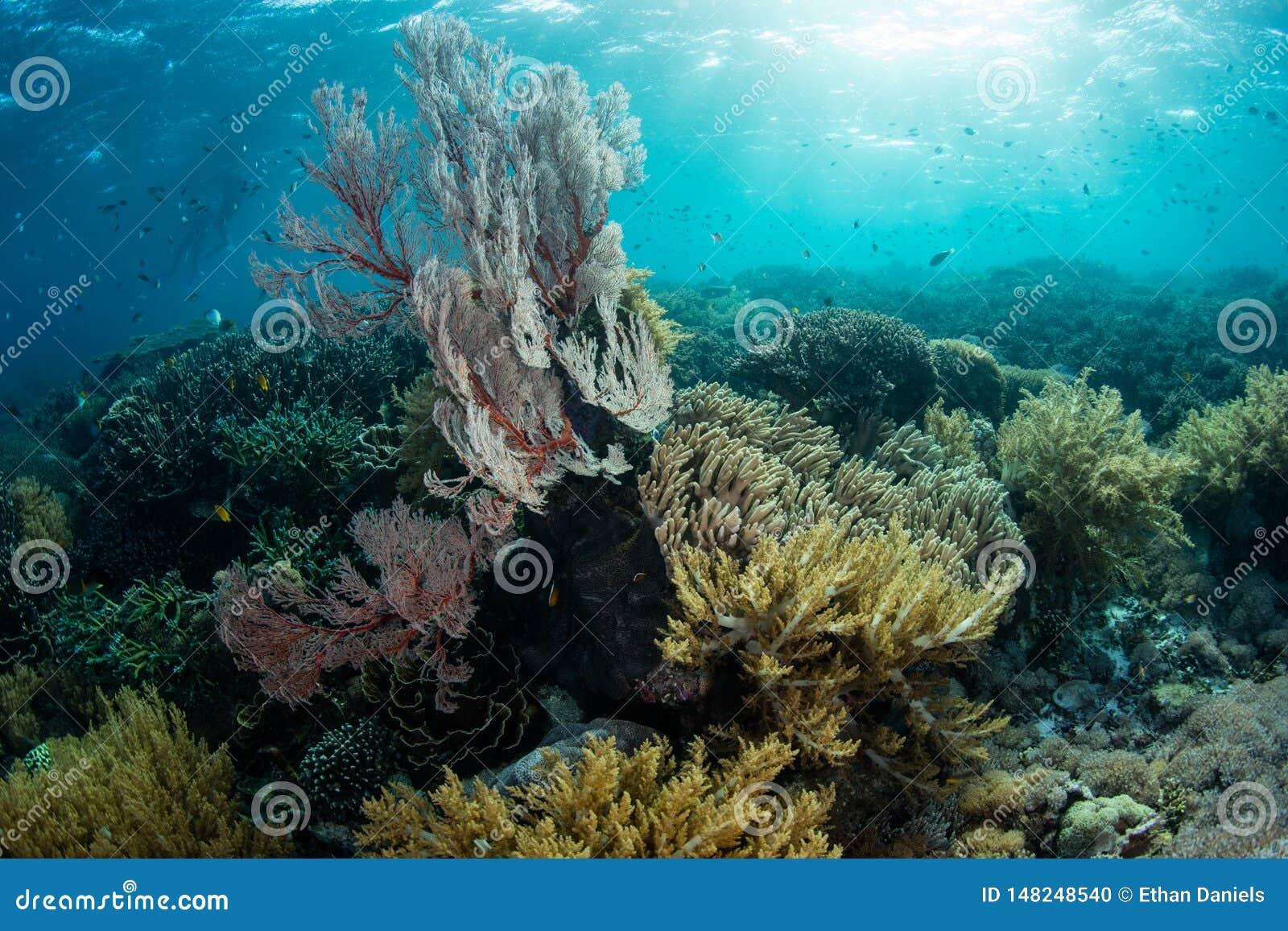 Solljus och ursnygga koraller i den Komodo nationalparken