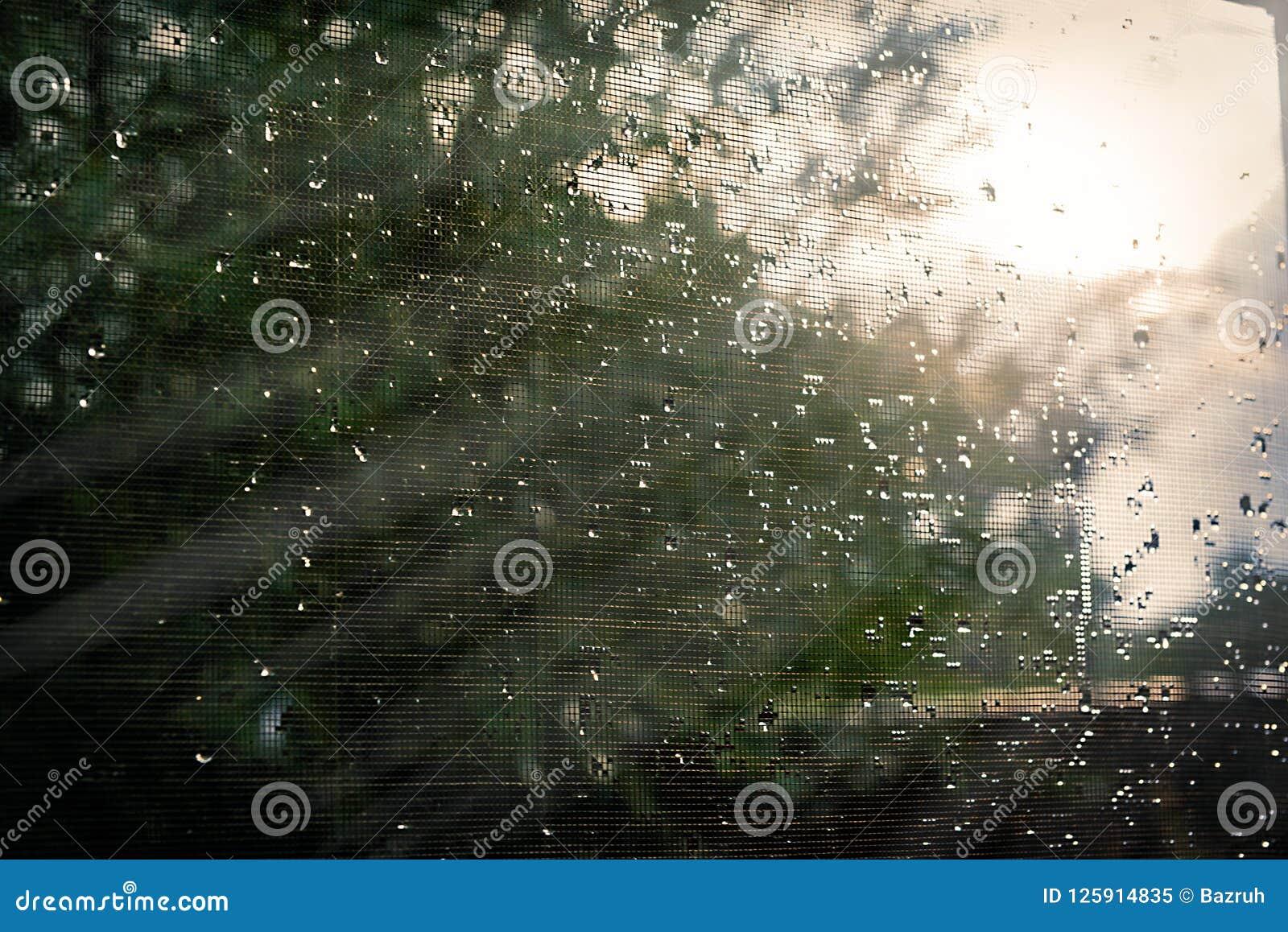Solljus till och med ett fönster med ett vått raster