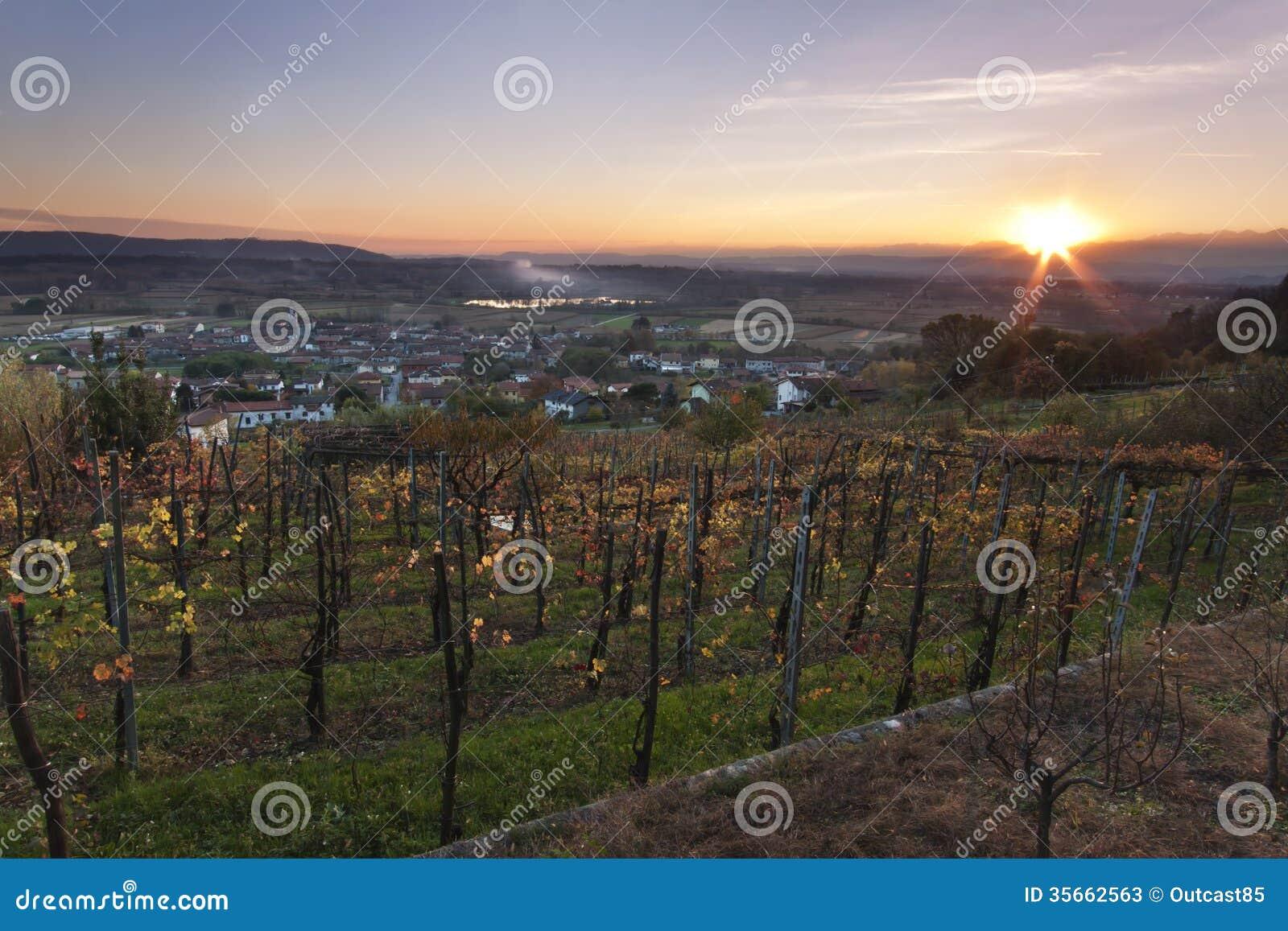 Solnedgång över italiensk vingård på höst