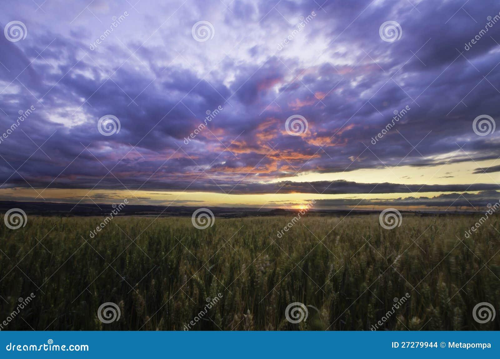 Solnedgång över sädes- fält