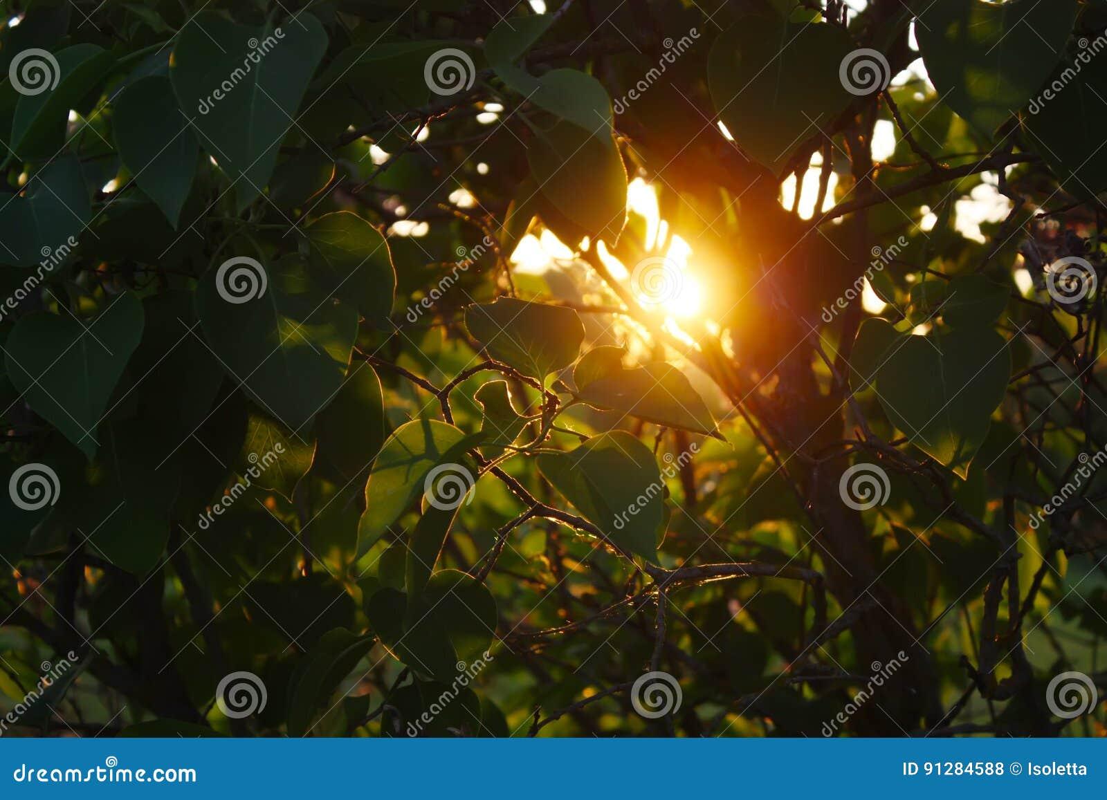 Solnedgång i bygd