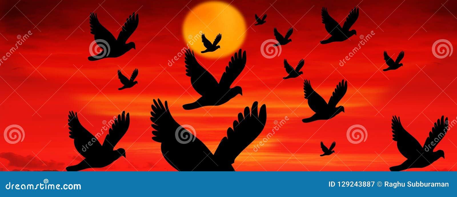Solnedgång med flygfåglar
