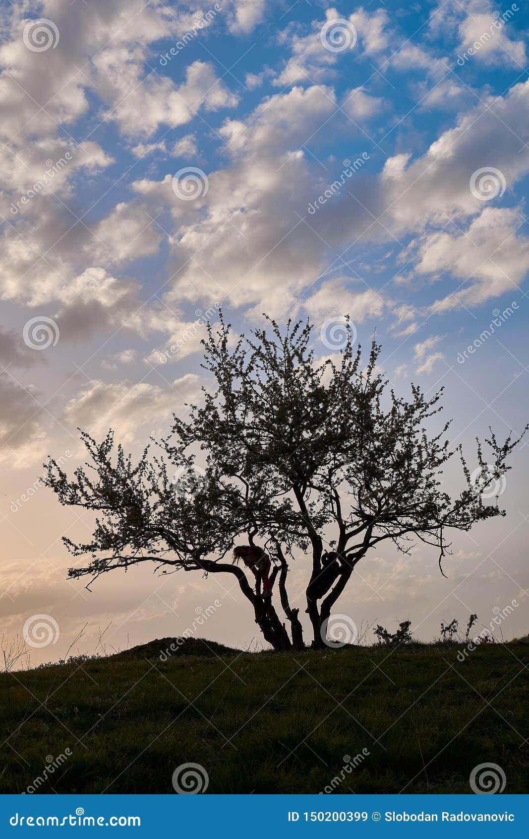 Solnedgång och kontur av en trädpojke och flicka