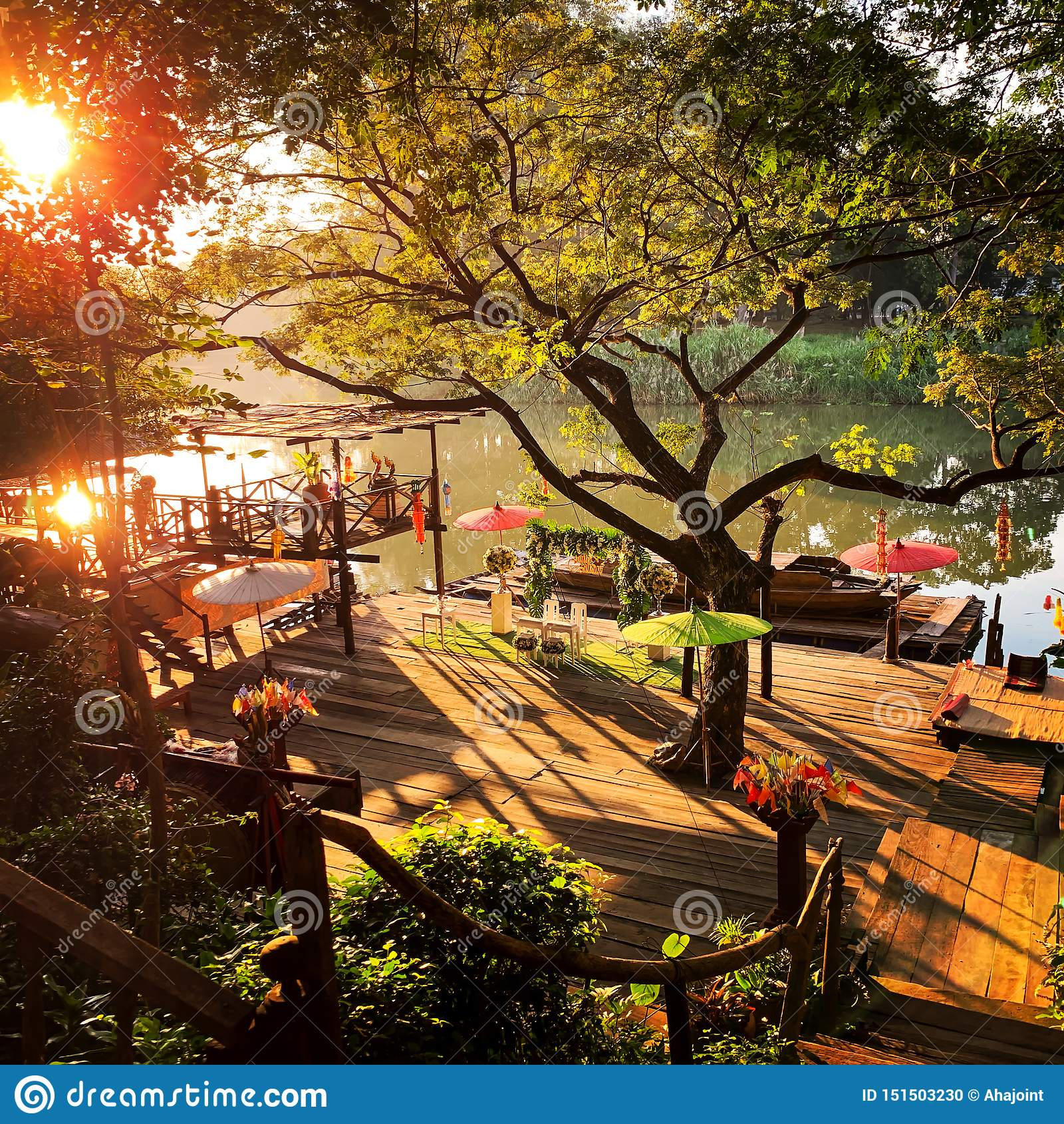 Solnedgång på floden och det stora trädet