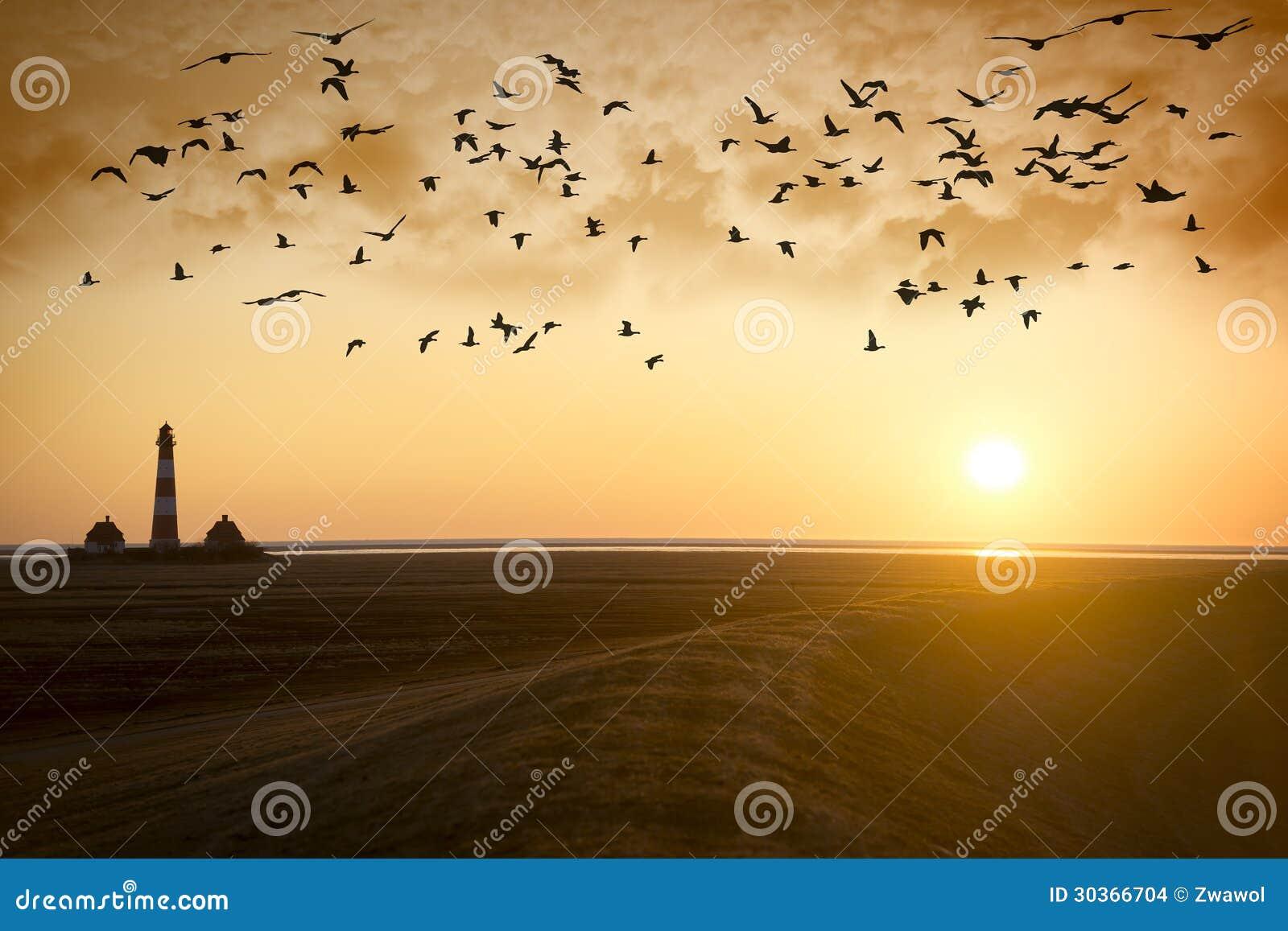 Solnedgångfyr med flyttfåglar