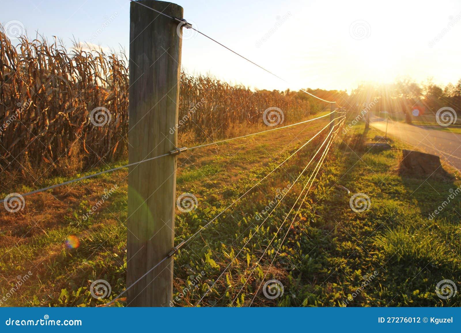 Solnedgång på lantgården, havrefält bak staket
