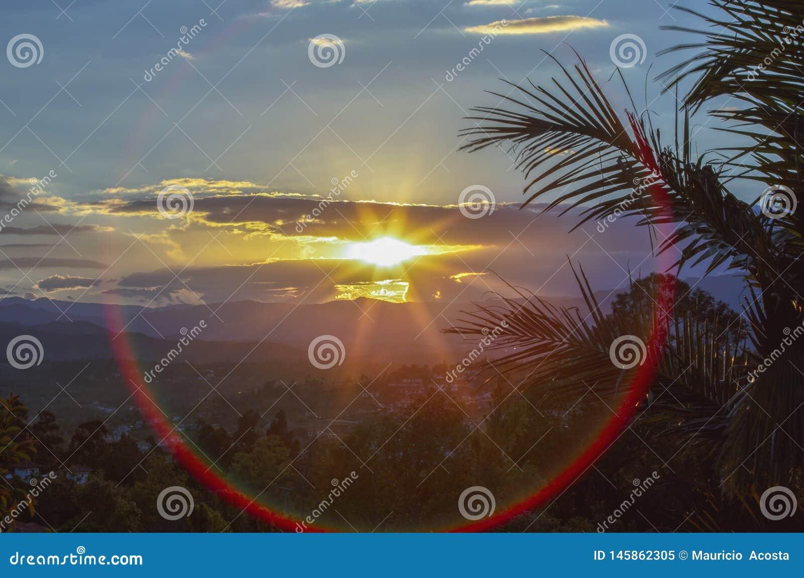 Solnedgång som inramas med palmblad och en röd linssignalljus