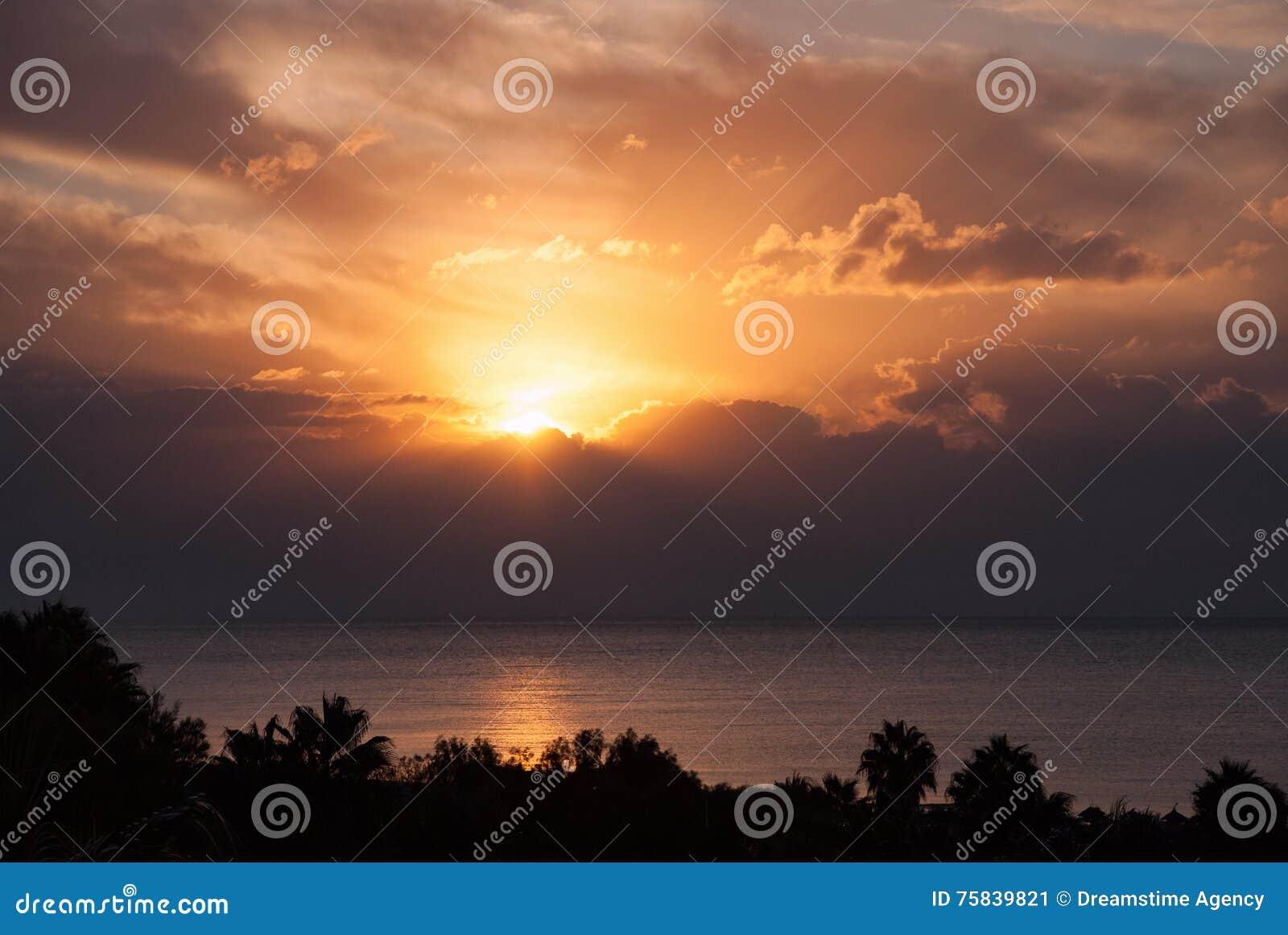 Solnedgången fördunklar palmträdkonturhorisonten