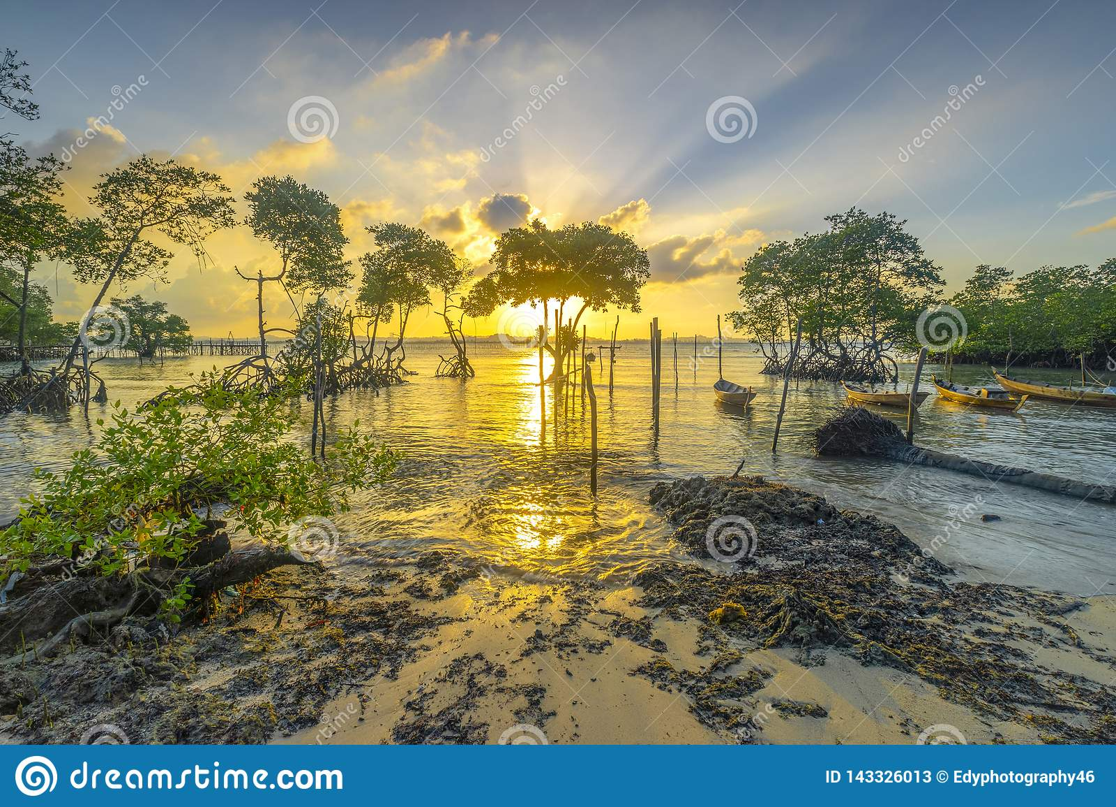 Solnedgången mellan mangroveträd