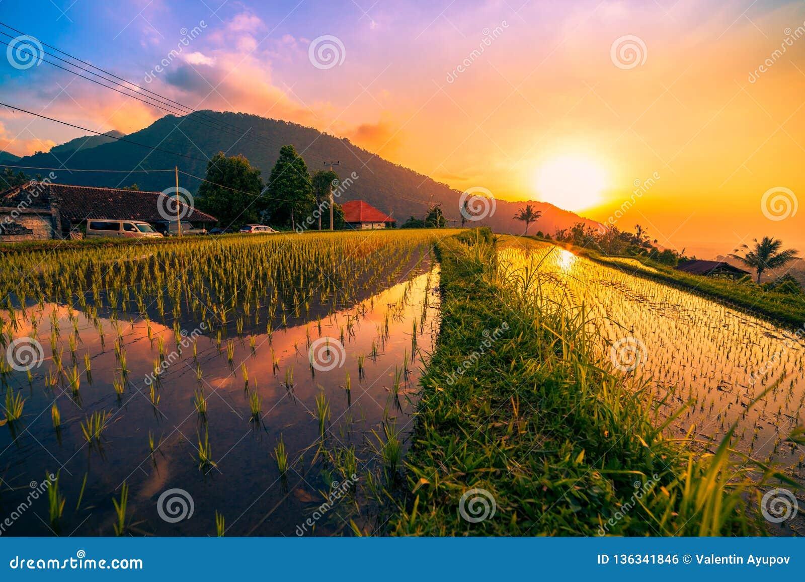 Solnedgången på risfält på Jatiluwih terrasserade av Ubud, Bali, Indonesien