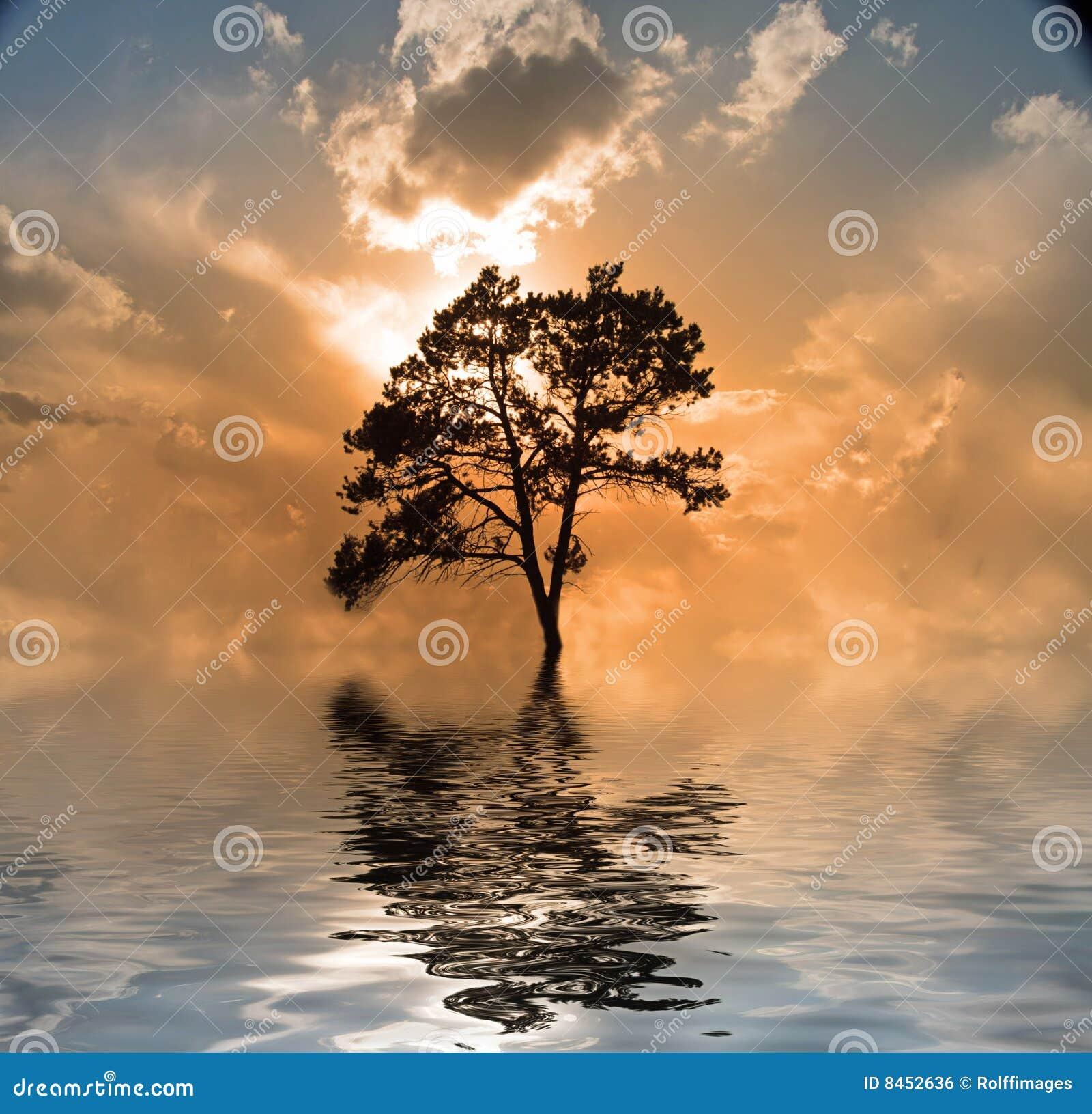 Solnedgångtreevatten