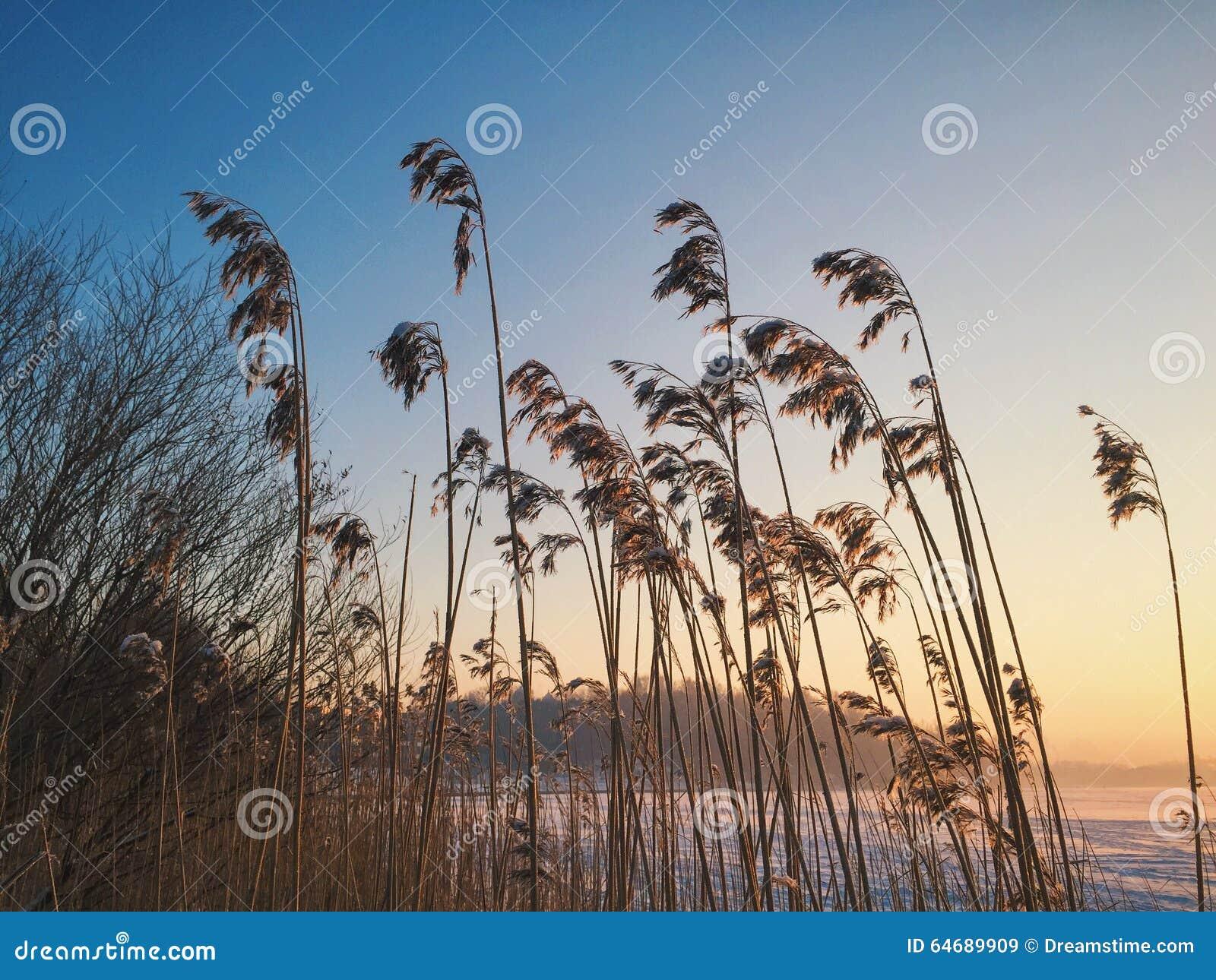 Solnedgångvinter