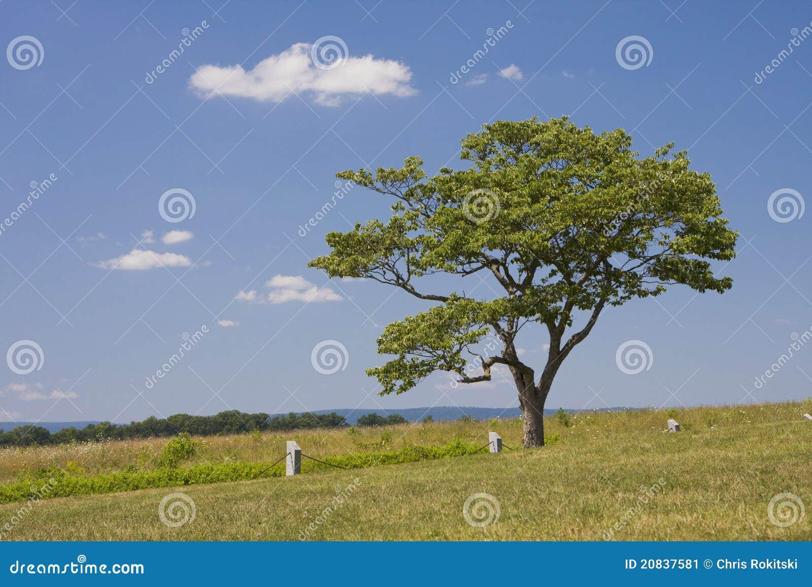 Solo árbol en campo abierto