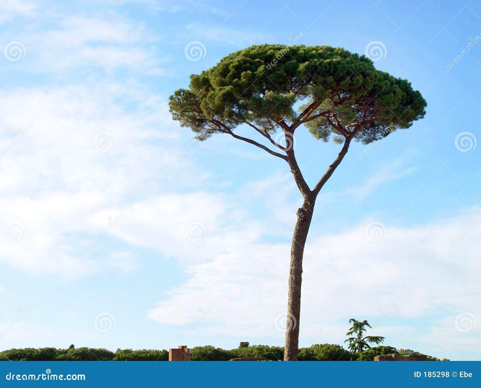 Solo árbol en Italia.