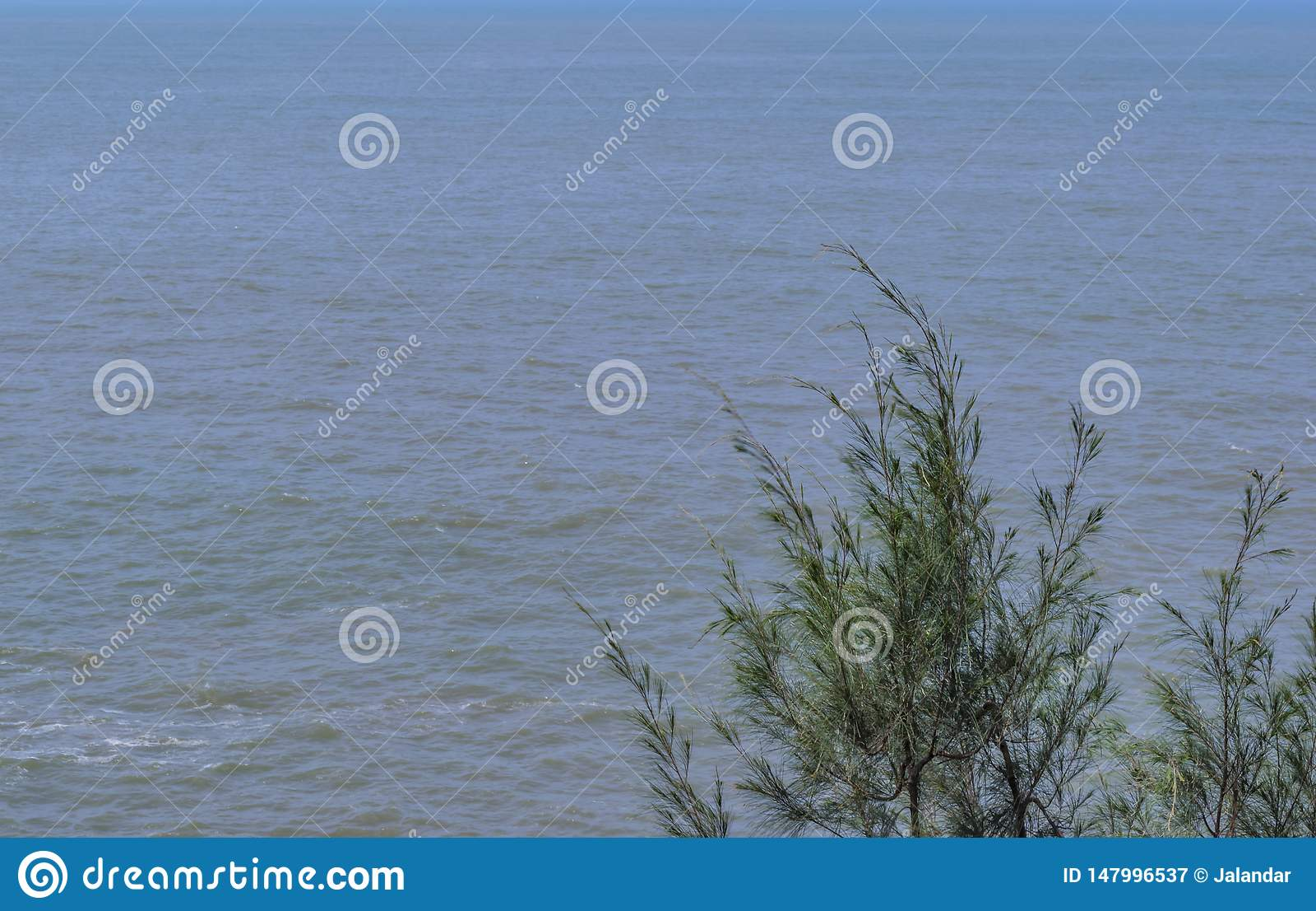 Solo árbol - en un fondo del océano