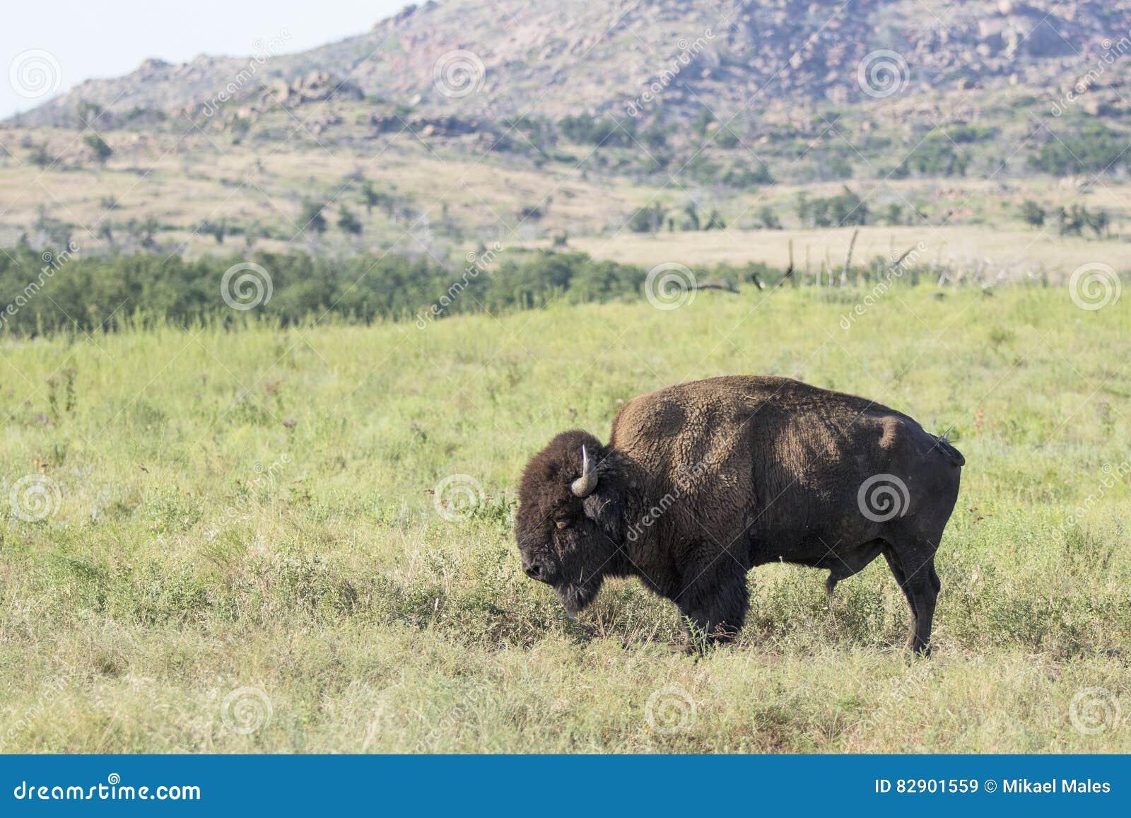 Solo toro
