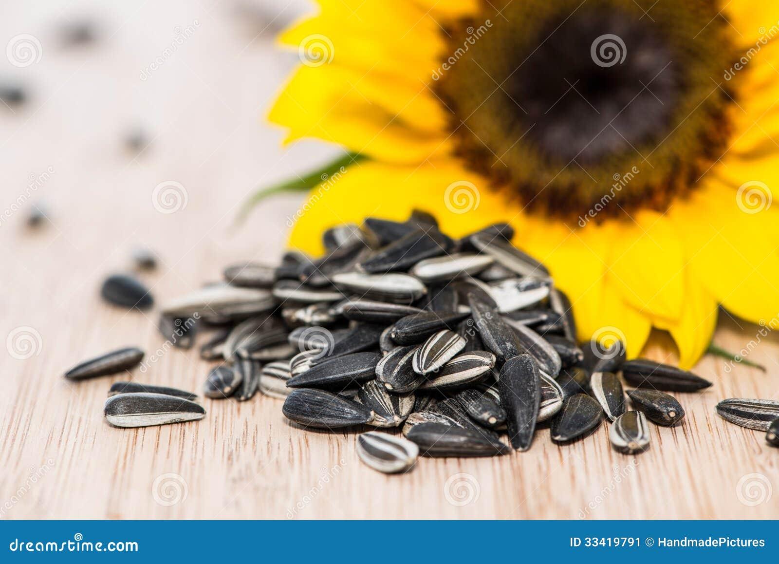 Solros med frö på trä