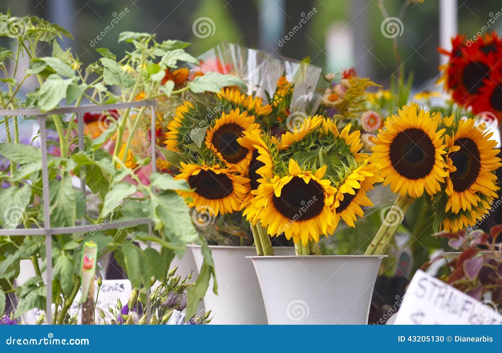 Download Solrosor arkivfoto. Bild av färgrikt, växter, brigham - 43205130