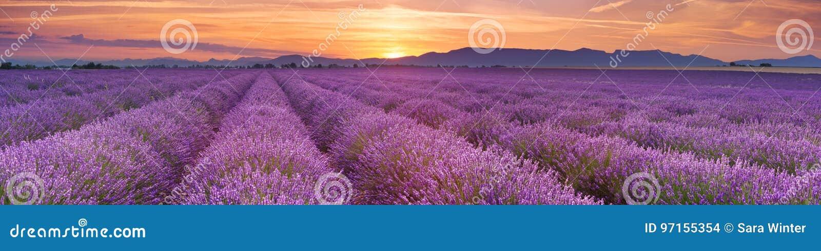 Soluppgång över fält av lavendel i Provence, Frankrike