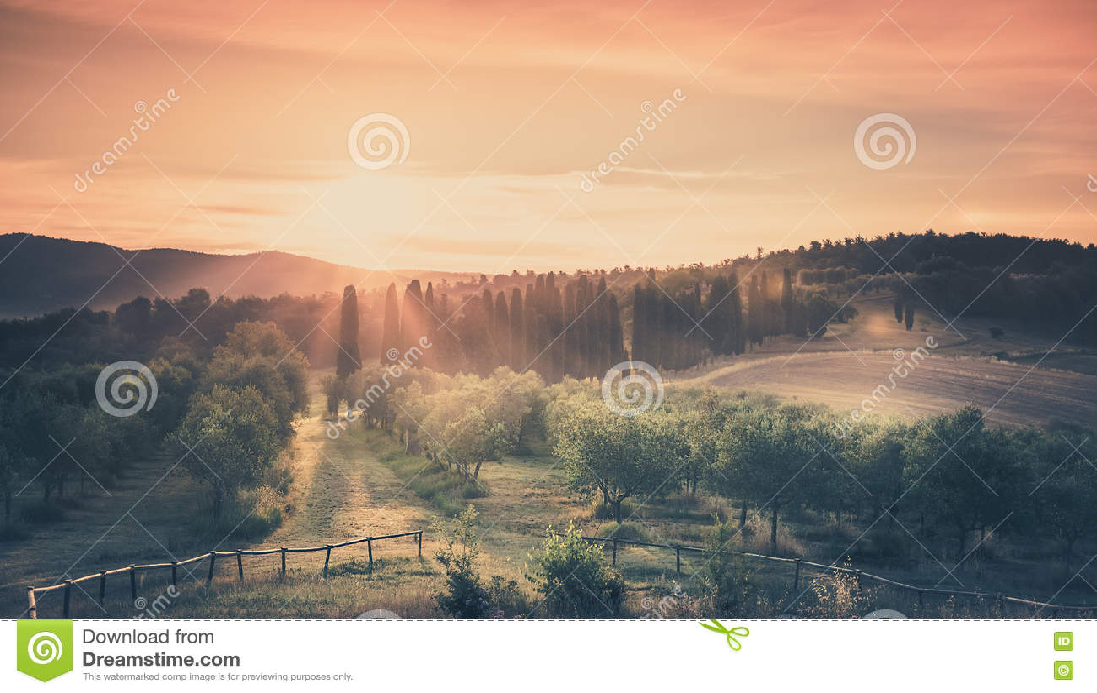 Soluppgång över olivgrönt fält