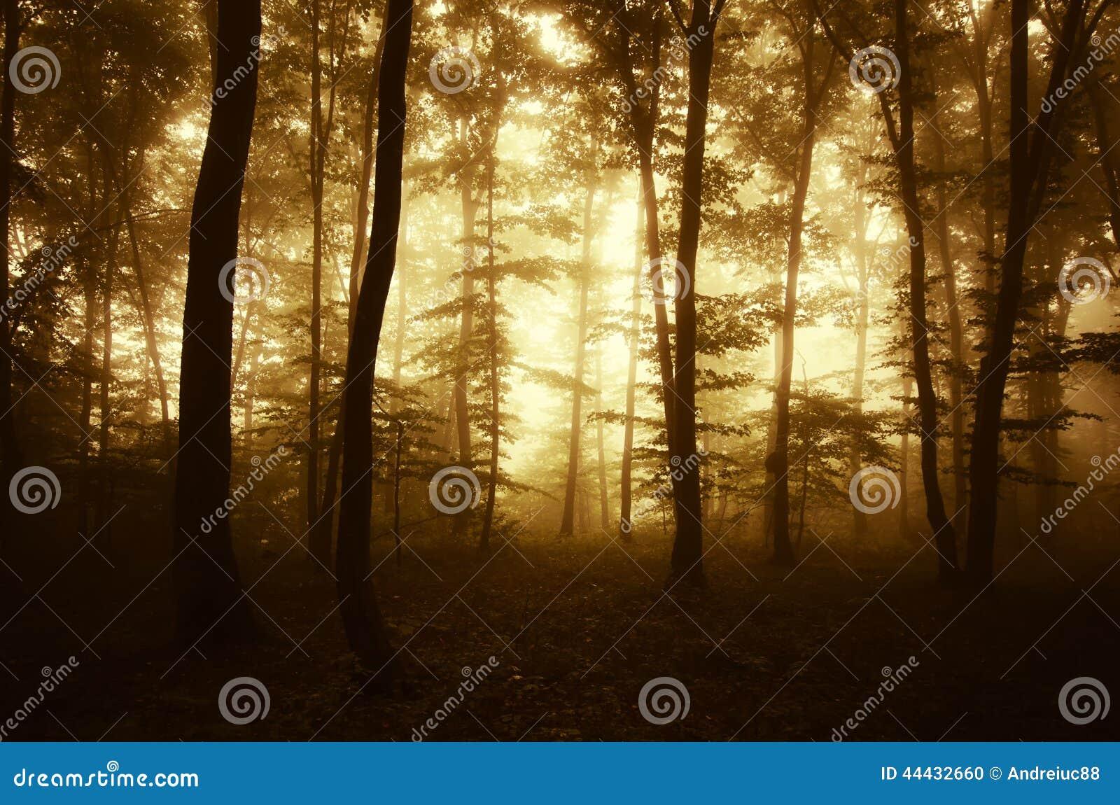 Soluppgång i en mystisk förtrollad skog med dimma