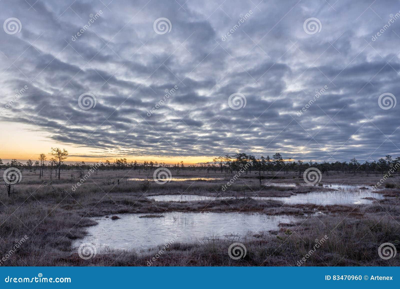 Soluppgång i myren Iskallt kallt träsk Frostig jordning Träsk sjö och natur Frysningtemperaturer i hed Muskeg naturlig miljö