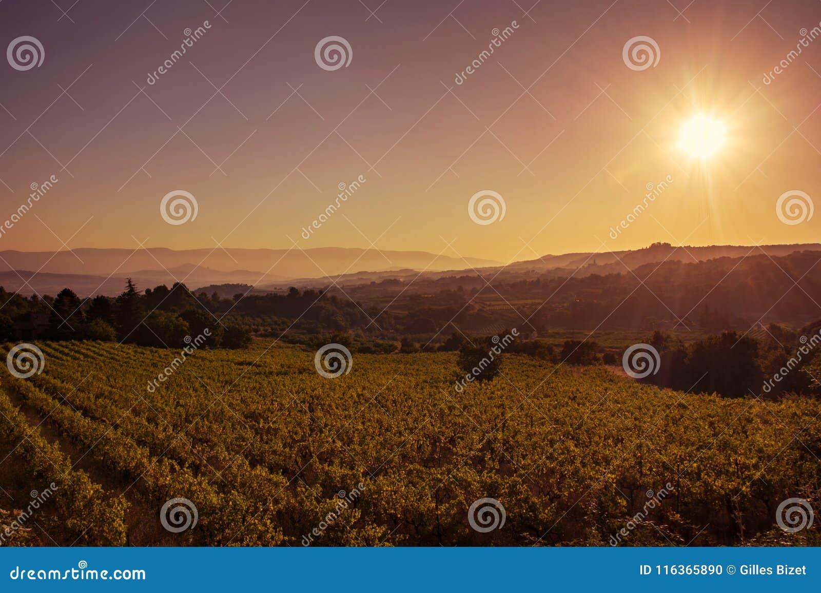 Soluppgång på den Provencal vingården
