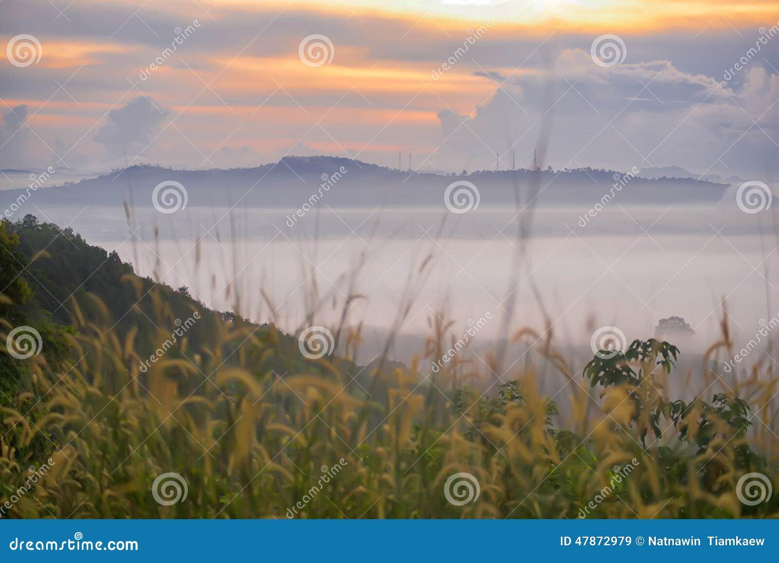 Soluppgång på ett dimmigt fält